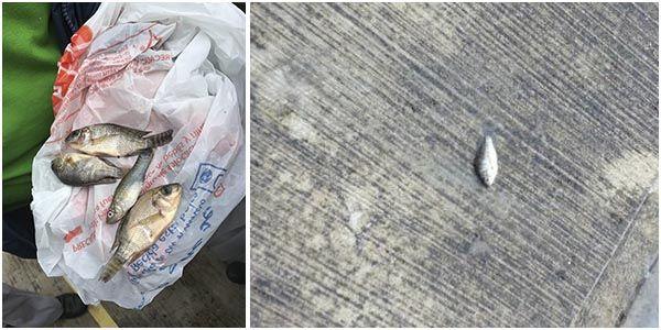 (adsbygoogle = window.adsbygoogle || []).push();   Un sorprendente fenómeno se registró esta semana en Tampico, localidad ubicada en el estado de Tamaulipas al norte de México: llovieron peces. La información fue confirmada por las autoridades de Protección Civil en su cuenta de...