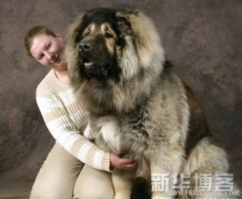 No idea what kind of dog this is - just that it is huge