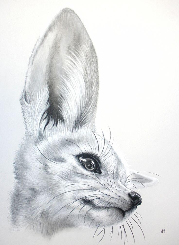 Fennec Fox Drawing Audrey Migeotte.jpg (2607×3576)