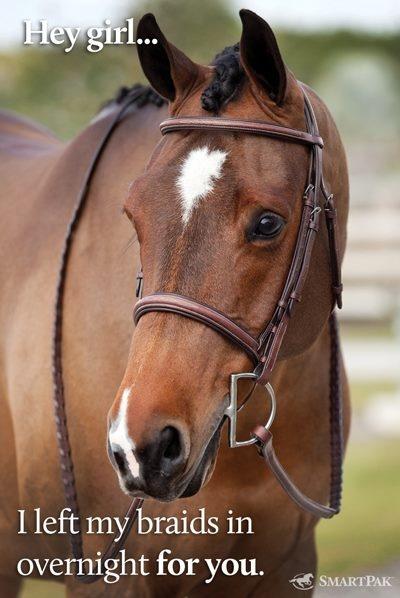 Hunter jumper eventing horse equine grand prix dressage equestrian ALWAYS PLAT UP BEFORE YOUR EVENT