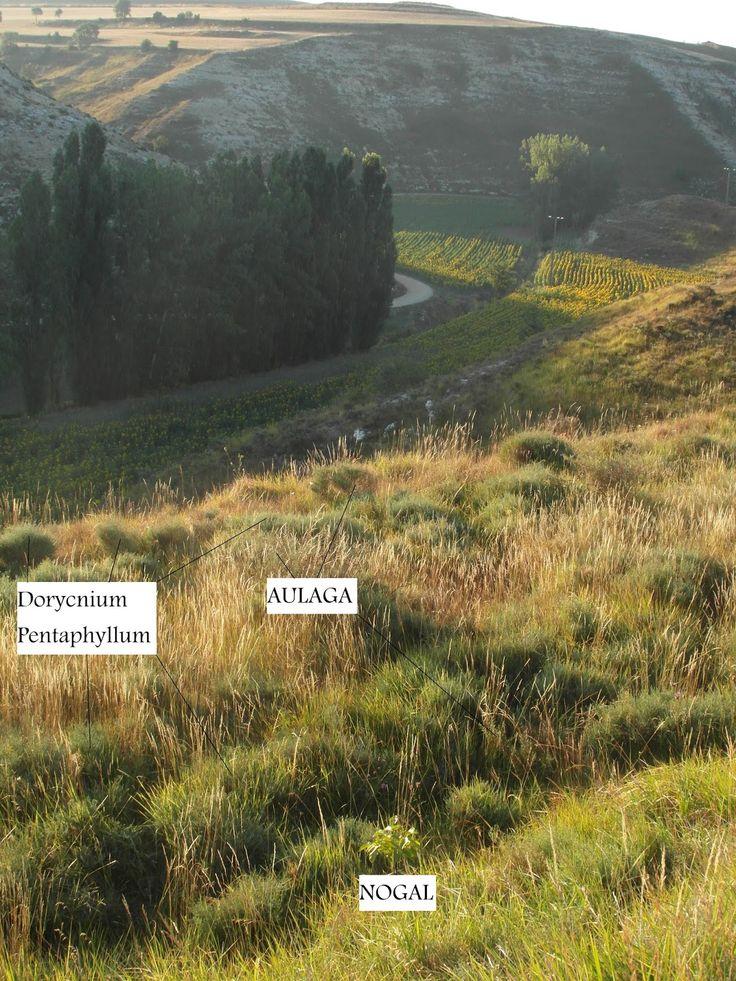 Un bosque de alimentos en la meseta: El quid de la cuestión: La sucesión ecológica