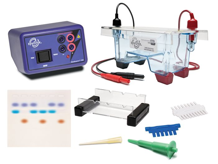 5061 - Demonstration DNA Electrophoresis LabStation™