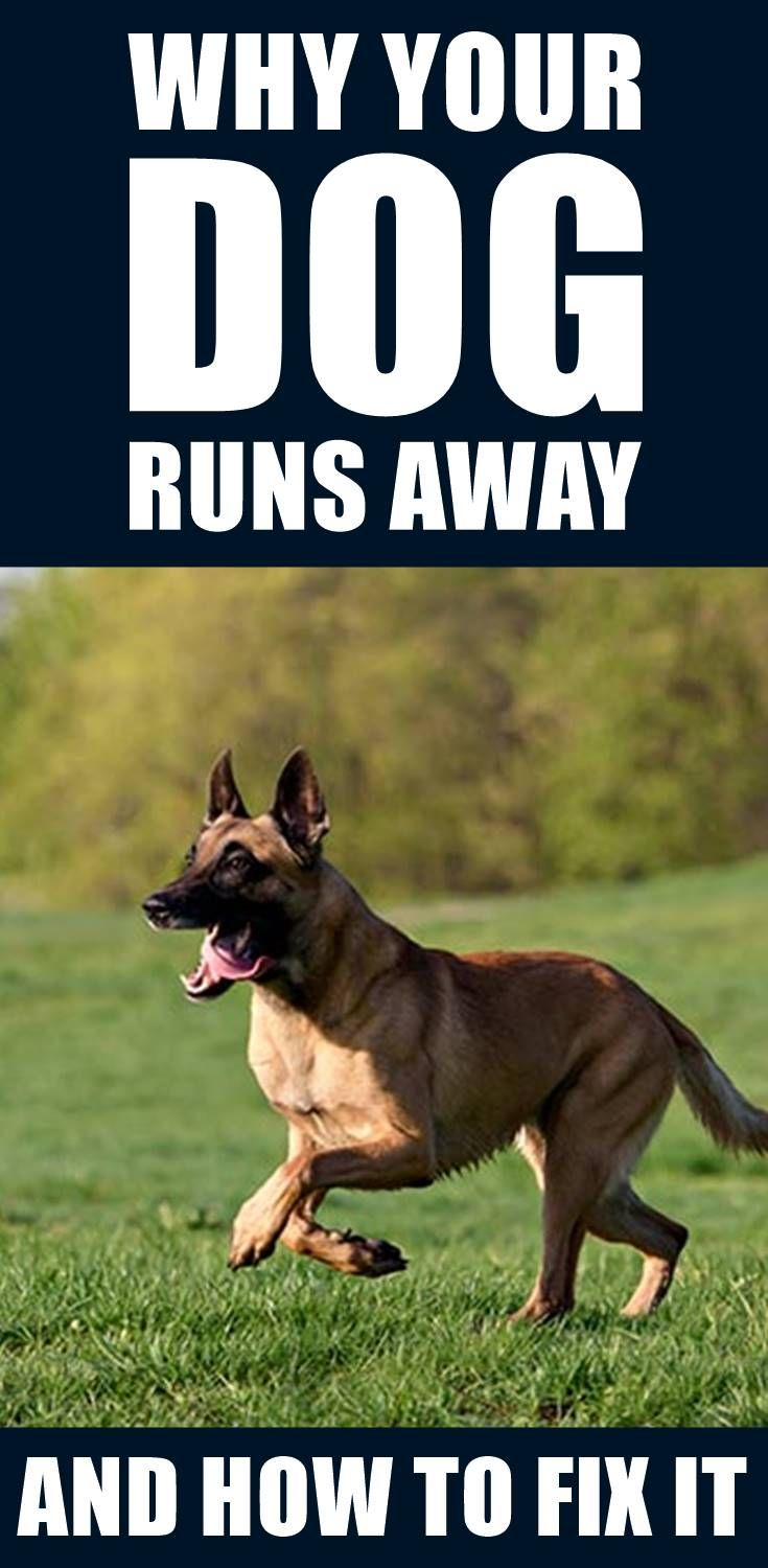 Do You Want To Get Your Dog To Stop Running Away Dogs Can