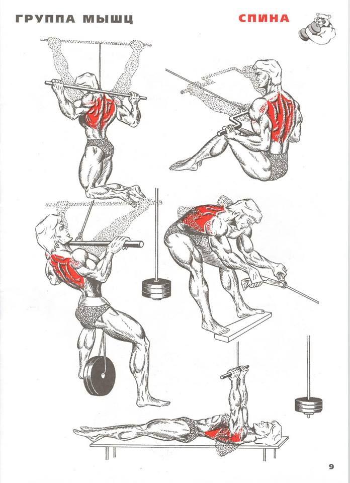 тоже традиционный полные курсы прокачки мышц в картинках действия