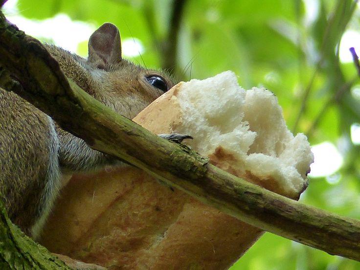 Greedy Squirrel!