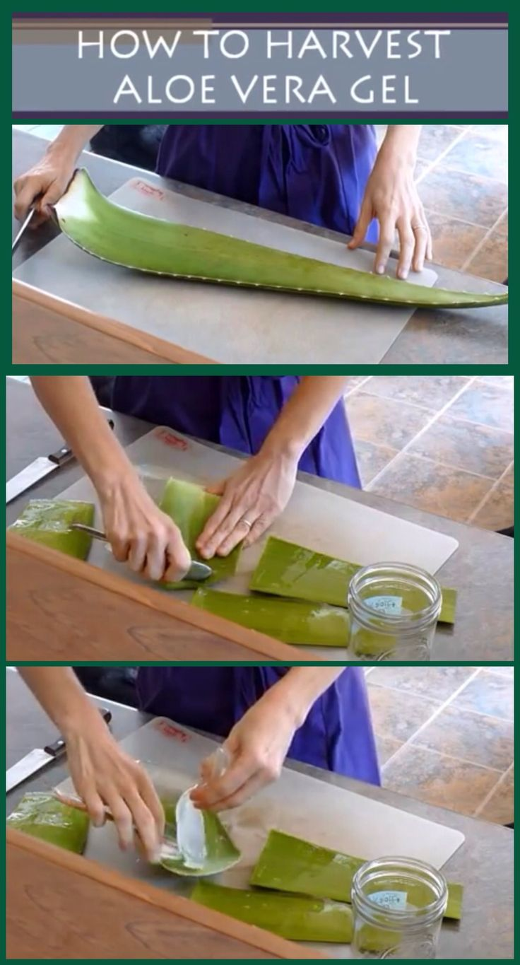 How to extract the gel from an Aloe Vera leaf.