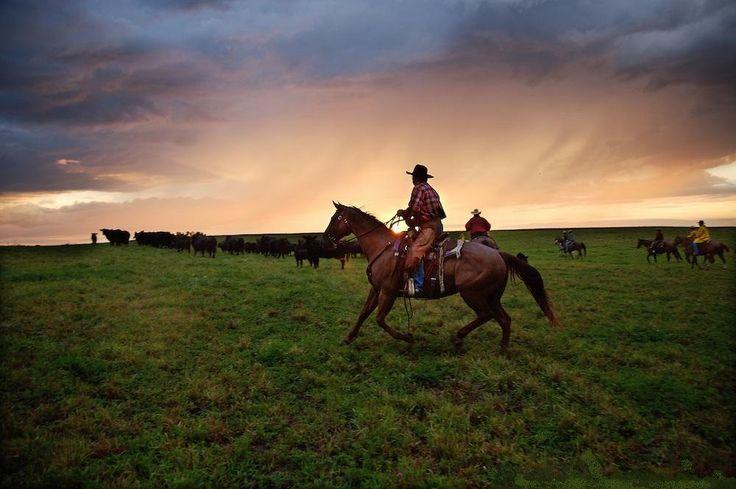 609 Best Cowboy Work Images On Pinterest Cowboys