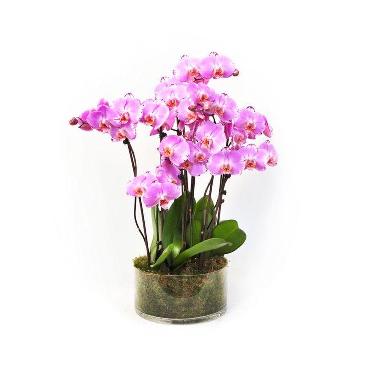 Image result for BOL-68: Orquídeas en flor bogota