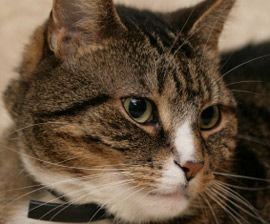 Solving Litter Box Problems : The Humane Society of the United States