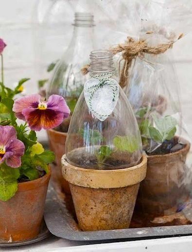 Até mesmo uma hortaliçazinha seria um charme... quem não quer ser mimado com uma graça dessas?