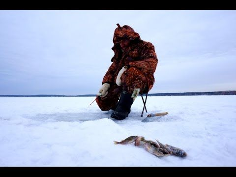 Зимняя рыбалка на Рыбинском водохранилище. Ловля окуня со льда.