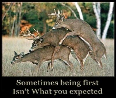 Deer Pictures | Funny as all get-out...YES!...but...for the redneck hunter... he's not ...