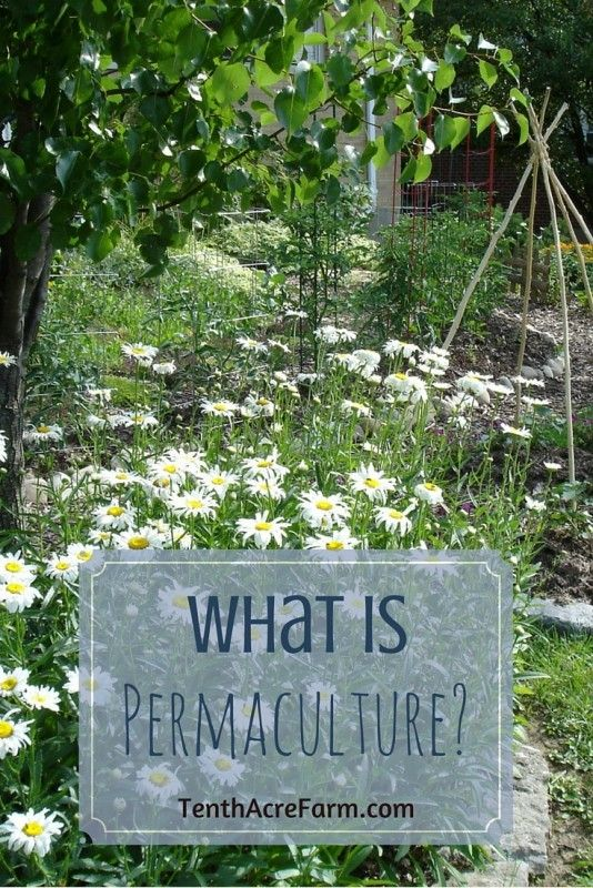 Permaculture is a buzz word that is heard frequently in gardening and homesteading circles, but what does it mean? In this article I will define permaculture (as I see it) and share resources for learning more.