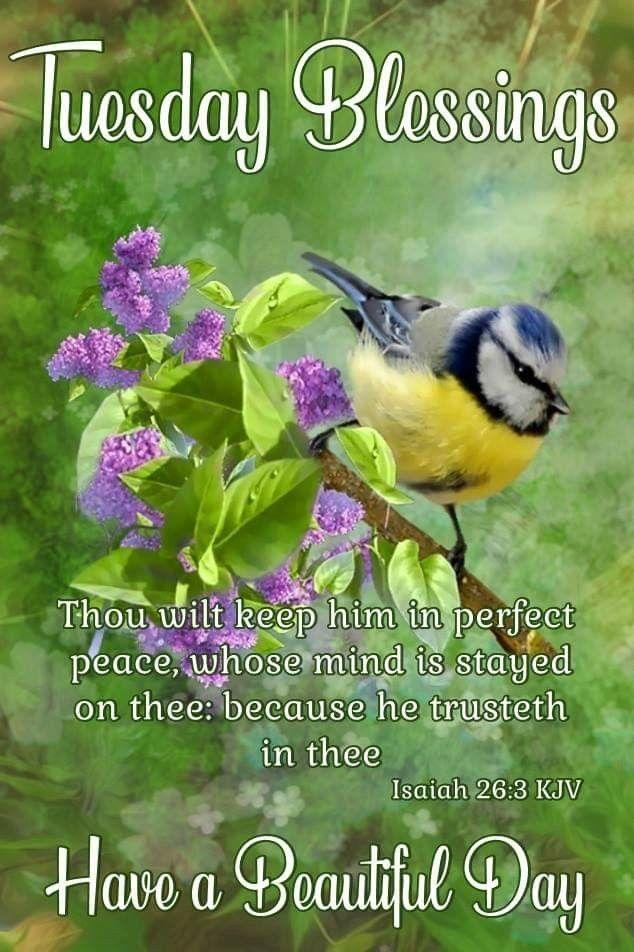 20+ Inspiration Prayer Tuesday Blessings Kjv - Poppy Bardon | Blessings  Pictures