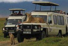 On safari in Serengeti
