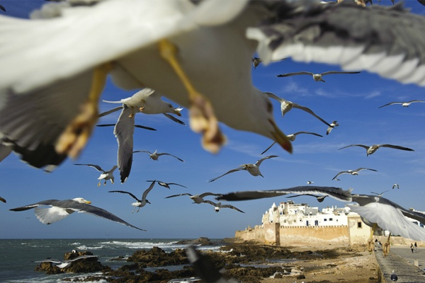 In volo sulla città  Fotografia di Guillem Lopez / My Shot  Marocco