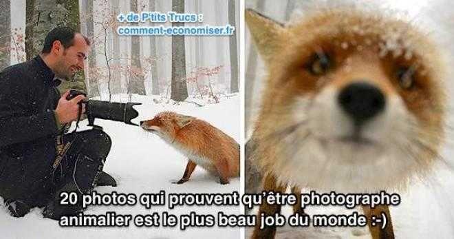 20 Photos Qui Prouvent qu'Être Photographe Animalier Est le Plus Beau Job du Monde.
