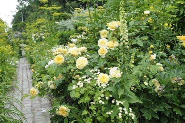 Claus Dalbys gule bed med roser og stauder