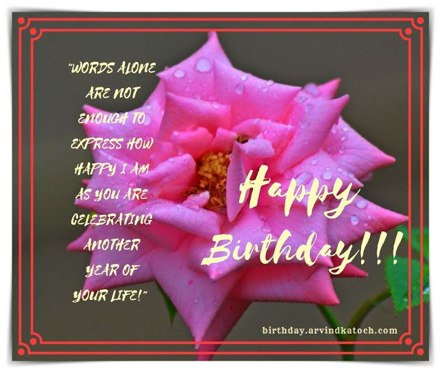 Beautiful Pink Rose Birthday Card HD Free Download