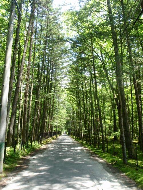 旧軽井沢の森をレンタサイクルで駆け抜ける! 軽井沢の見所まとめ。