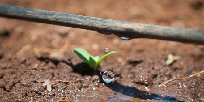 Israeli Drip Irrigation Company Gives Global Answer to Water Scarcity  9.21.15   The innovative Israeli methods of utilizing water to its maximum capacity has enabled countries to increase their yields using half the amount of water.
