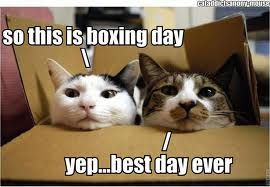 Everyday is boxing day for cats.