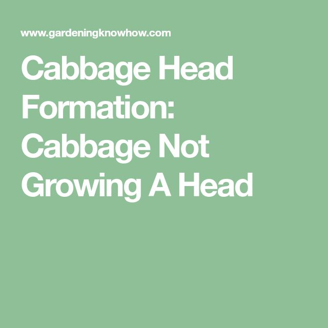 Possible Reasons Why Cabbage Won't Form A Head