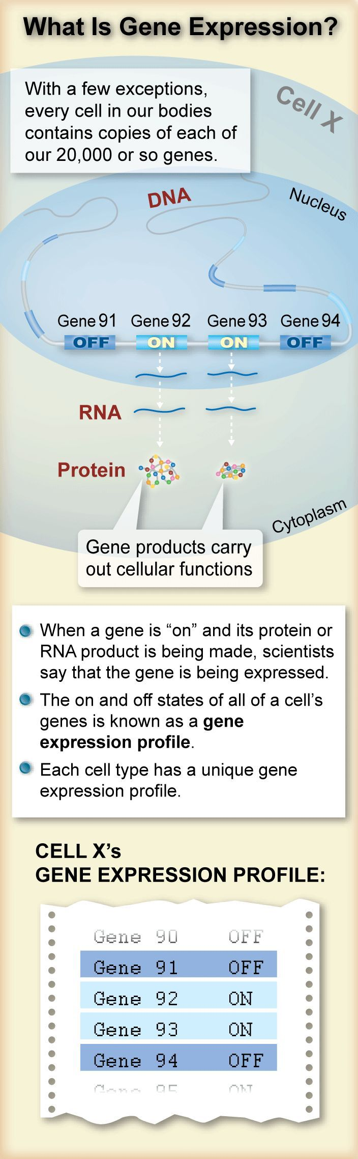 gene expression visual