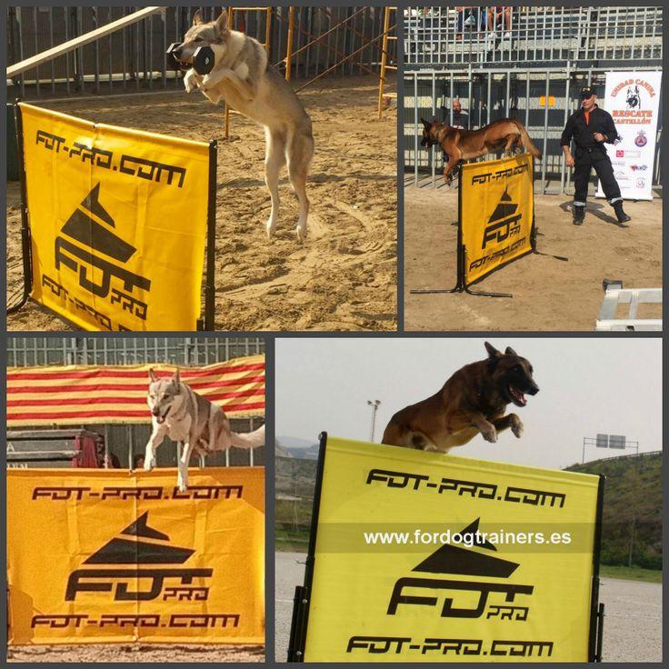 Saltómetro para adiestramiento de perros, una herramienta práctica de entrenamiento canino en salto de obstáculos, que corresponde a la medida reglamentaria de Schutzhund. Está realizada en polímero amarillo, resistente, lavable y ligero.  Ver más información: https://fordogtrainers.es/index.php/equipos/barrera-ligera-de-medida-reglamentaria-salto-alto-detail  #saltometro_para_perros #adiestramiento_de_perros #adiestramiento_canino #ForDogTrainers_España