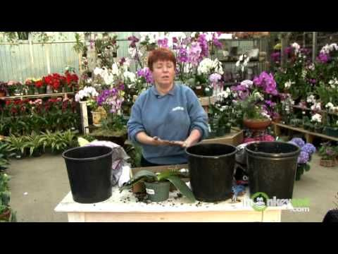 When to Repot Your Orchids - YouTube