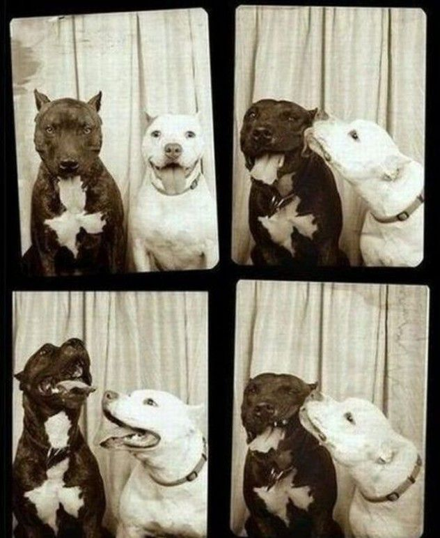 Doggy Photo Booth