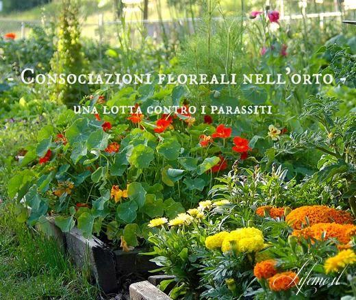 Le 25 migliori idee su fiori da balcone su pinterest for Abbellire il giardino