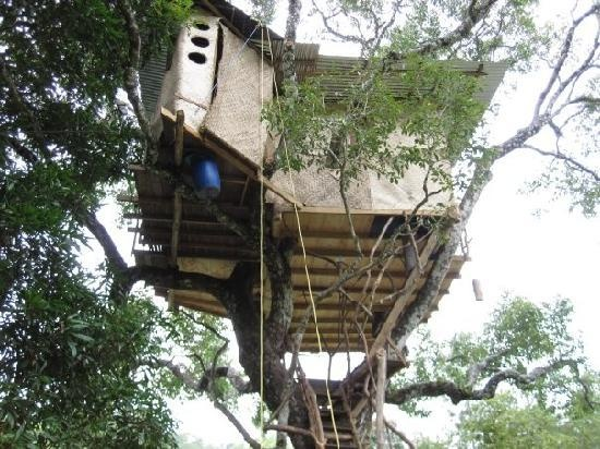 Tree House Plans For Adults 37 best tree house stuff!!! images on pinterest   architecture