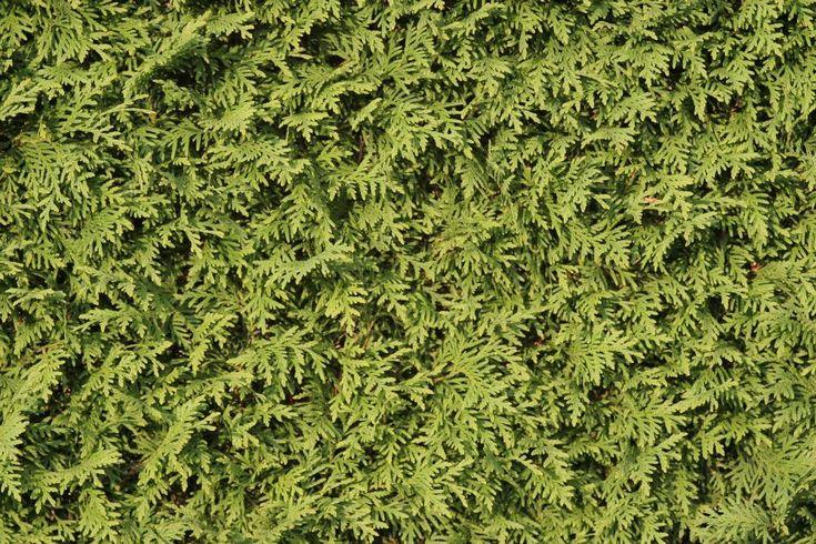 Wenn ein Bewohner einer Mietwohnung Balkonkästen anbringt, kann das zu Ärger mit den Nachbarn führen, weil Pflanzenteile herabfallen oder das Gießwasser tropft. So ist die Rechtslage.