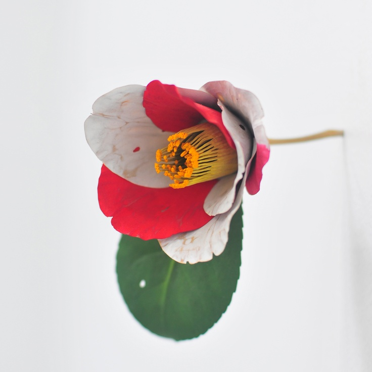 Yoshihiro Suda, Camelia, 2006, wood painted with rockpowder, 10 x 7 x 9 cm