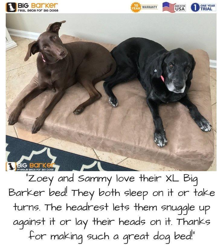Orthopedic Dog Beds For Large Extra Large Dogs Orthopedic Dog
