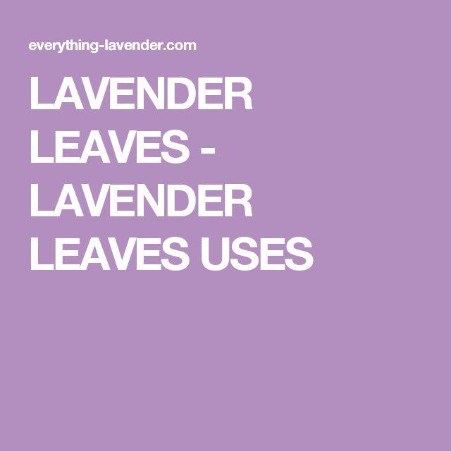 LAVENDER LEAVES - LAVENDER LEAVES USES