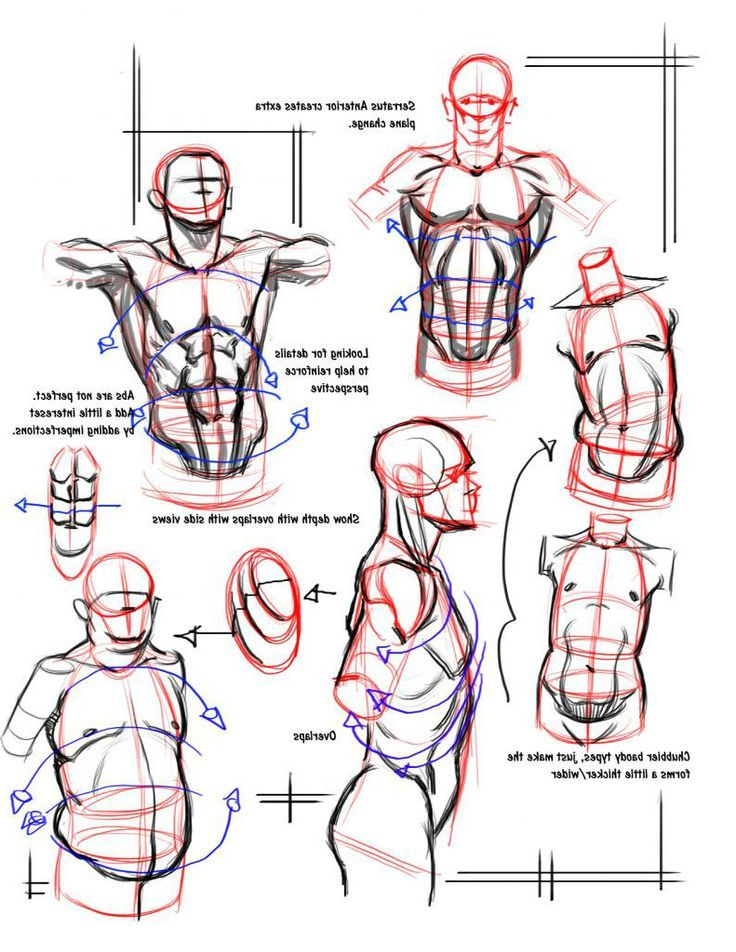 Basic Character Design Tips : Best images about male torso on pinterest sketching