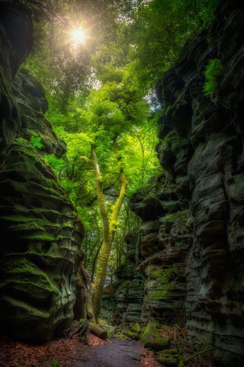 The Nature at Teufelsschlucht - Eifel  Germany...                                                                                                                                                                                 Mehr