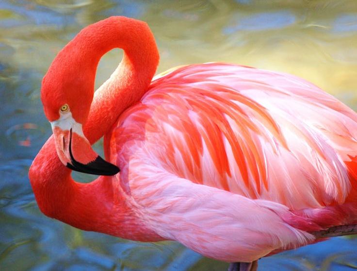 Pink Caribbean Flamingo 9 x 12 Portrait Fine Art Photographic Print #FPOE by Janice McCafferty via Etsy.
