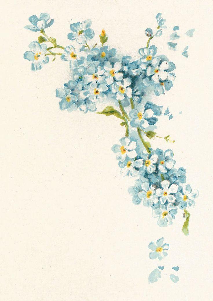 Antique Images: Free Vintage Flower Graphic: Blue Forget-Me-Not Flowers Corner Design