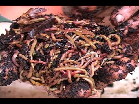 59 best worm farming images on pinterest worm farm earthworms 59 best worm farming images on pinterest worm farm earthworms and farming fandeluxe PDF