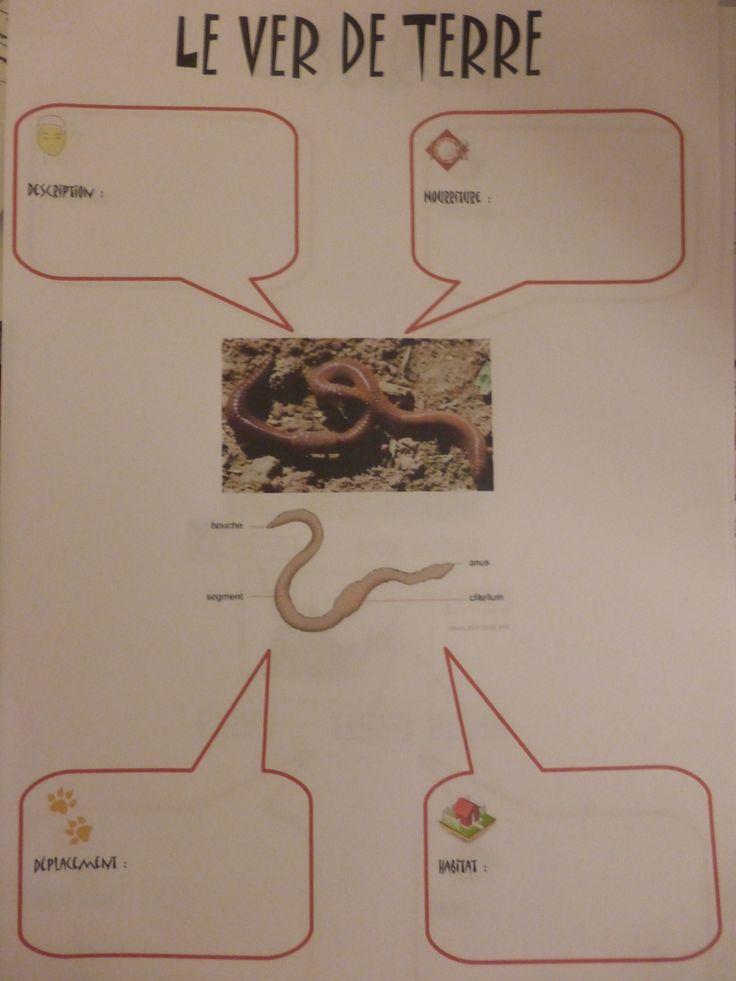 J'ai préparé des fiches d'identité pour les petites bêtes étudiés en classe en élevage: Le phasme L'escargot Le ver de terre Le poisson rouge A la fin de la séquence, je prépare la fiche et les enfants résument ce qu'ils ont appris en collant les étiquettes...