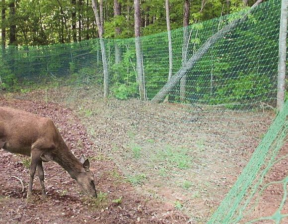 Cheap garden fence ideas - Deer Netting - Click Pic for 25+ Garden Fencing Ideas