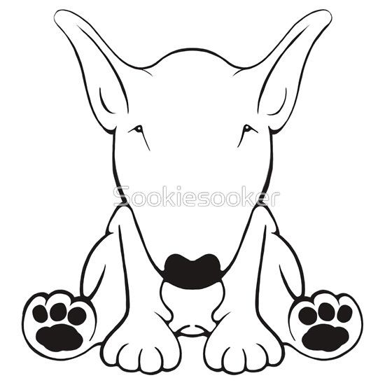 English Bull Terrier Forward Sit 2