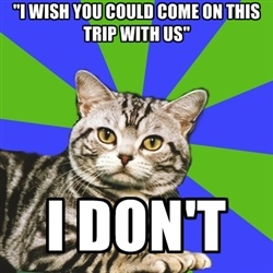 "Introvert Cat - ""i WISH YOU COULD COME ON THIS TRIP WITH US"" I DON'T"
