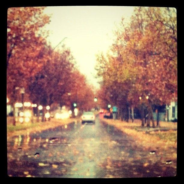 Santiago. Autumn. Leafs.