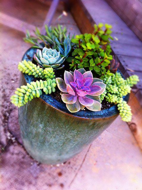 DIY: Potted Mixed Succulent GardenSucculents Can, Back Yards, Succulent Gardens, Potted Succulents, Front Porches, Succulent Planters, Backyards, Succulents Arrangements