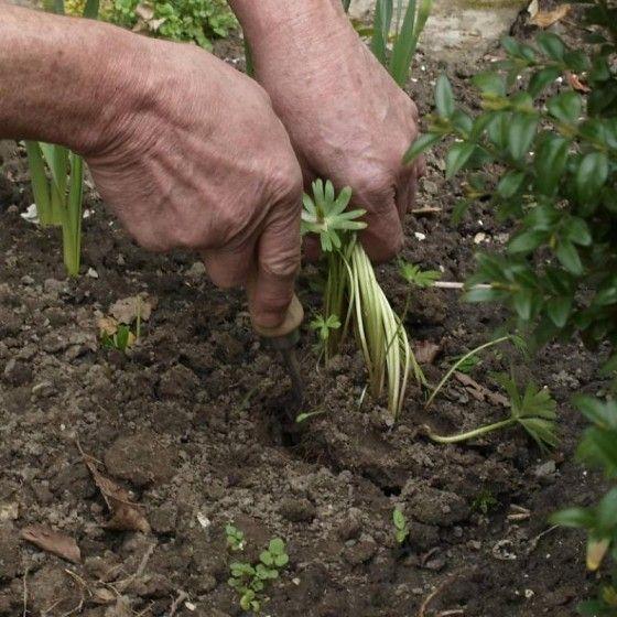 24 best Beaux outils de jardinage - Stockage et entretien images on ...