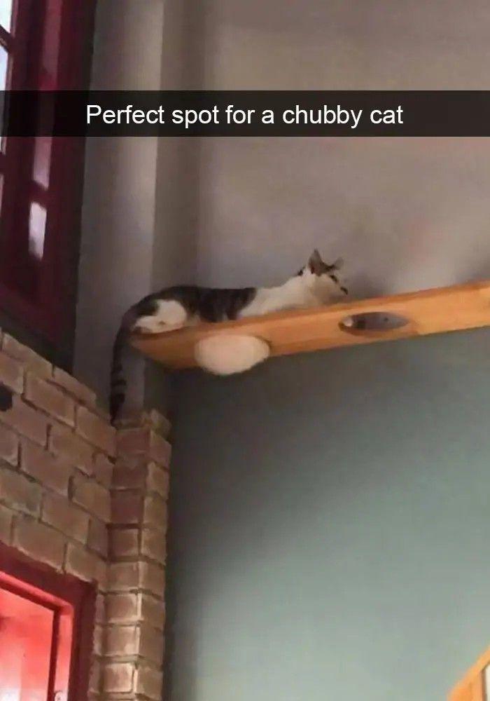 75 lustige Snapchats der Katzen, die vergnügt sind – AnimalsBay